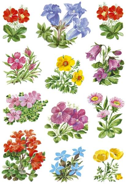 3582 Sticker DECOR Gebirgsblumen