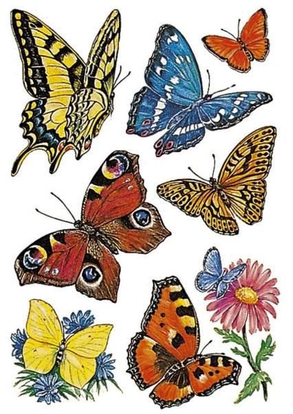 3801 Sticker DECOR Schmetterlinge