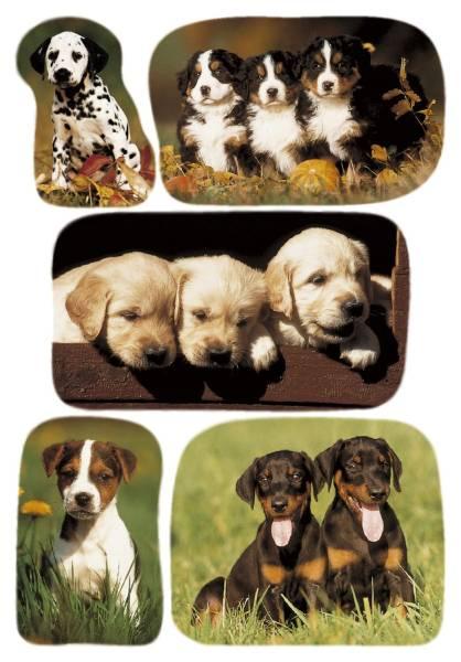 HERMA Schmucketikett Hundewelpenfotos 15 Stück 3528