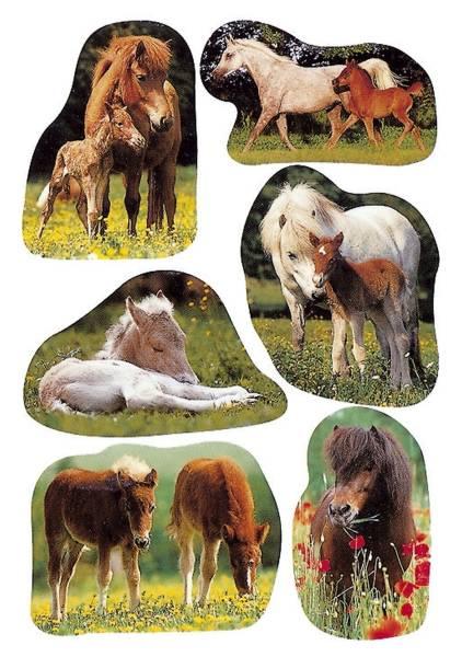 5443 Sticker DECOR Pferdefotos