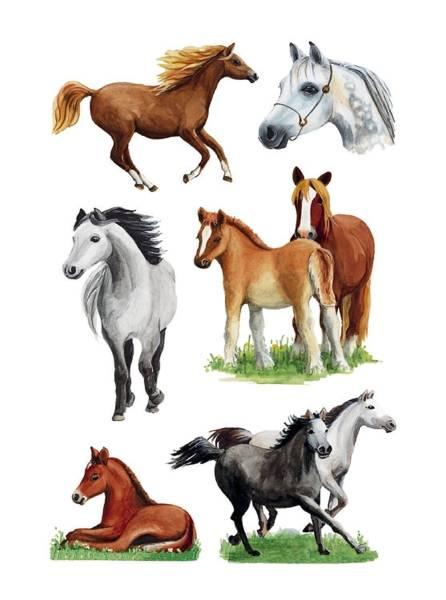 3553 Sticker DECOR Pferderassen