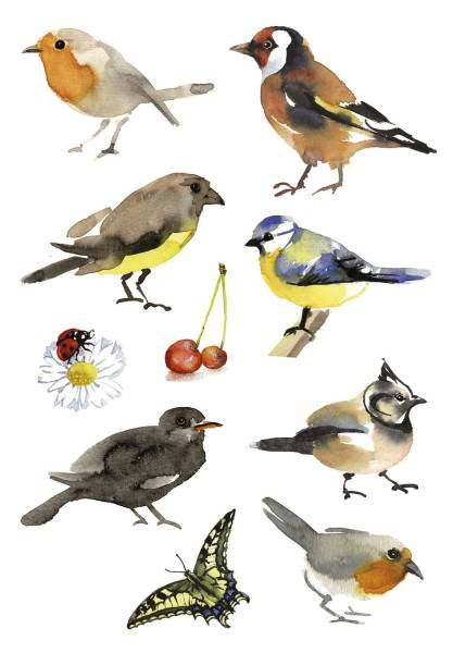 3351 Sticker DECOR Aquarell Vögel