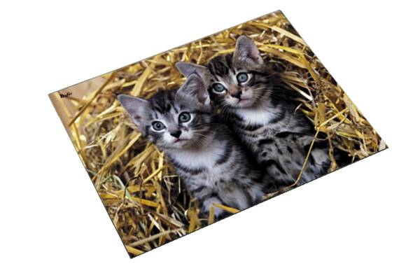 "Schreibunterlage Motiv Katze ""Katzen im Stroh"""