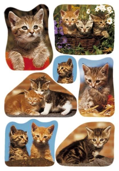 3527 Sticker DECOR Katzenfotos