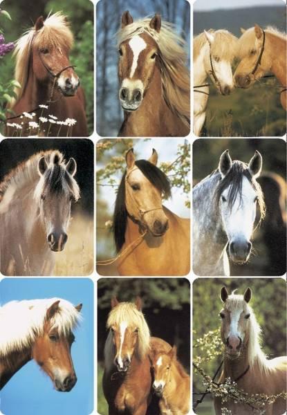 3568 Sticker DECOR Pferdeköpfe
