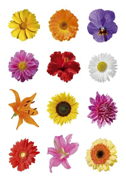 3309 Sticker DECOR Bunte Gerberas